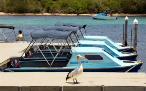 Boat Hire in Forster Tuncurry New South Wales